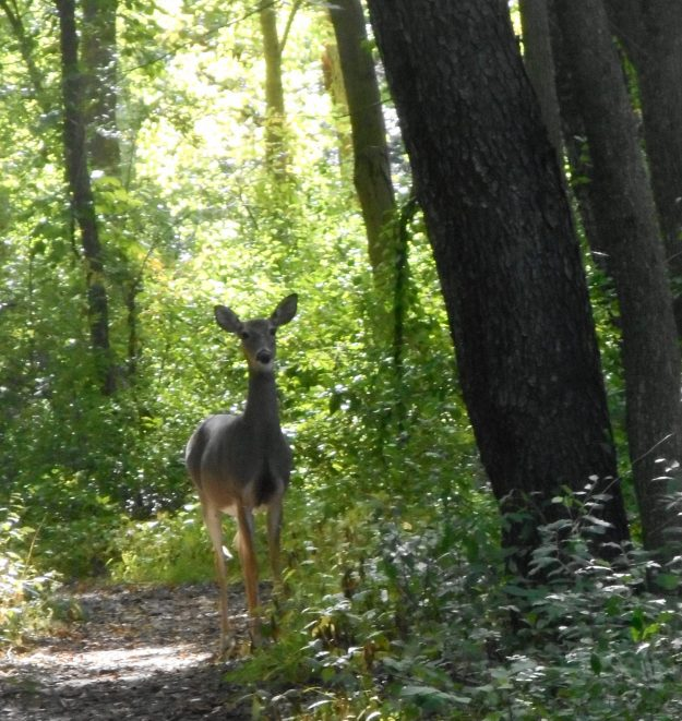 Photo Challenge:  Michigan Denizens Who Prefer Dense Forest